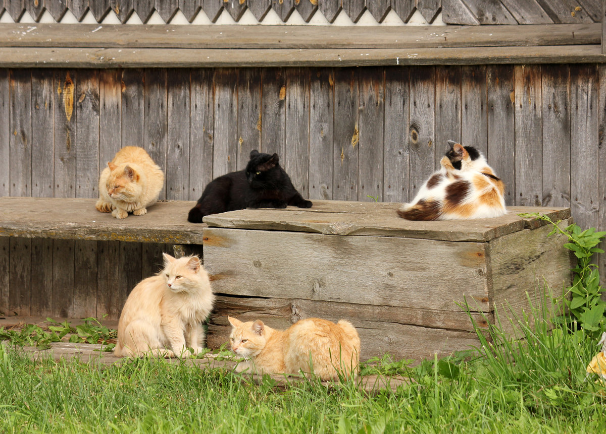 котята в деревне фото крошка обожает