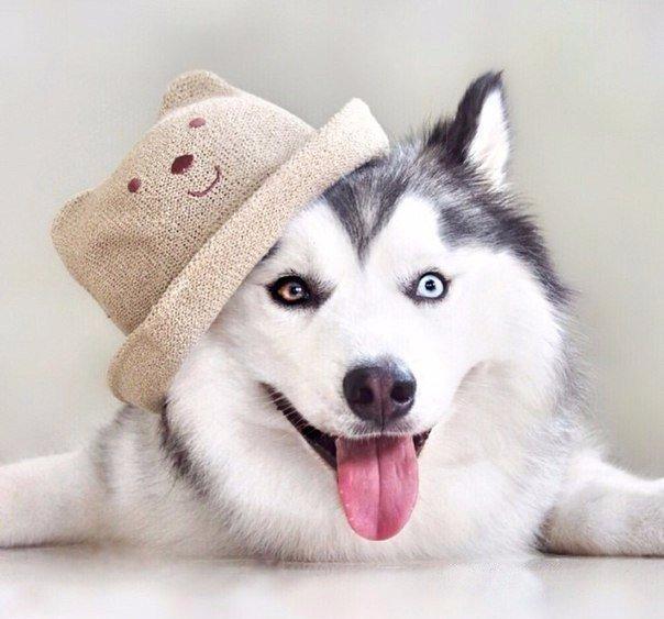 Смешная картинка на аву с собакой