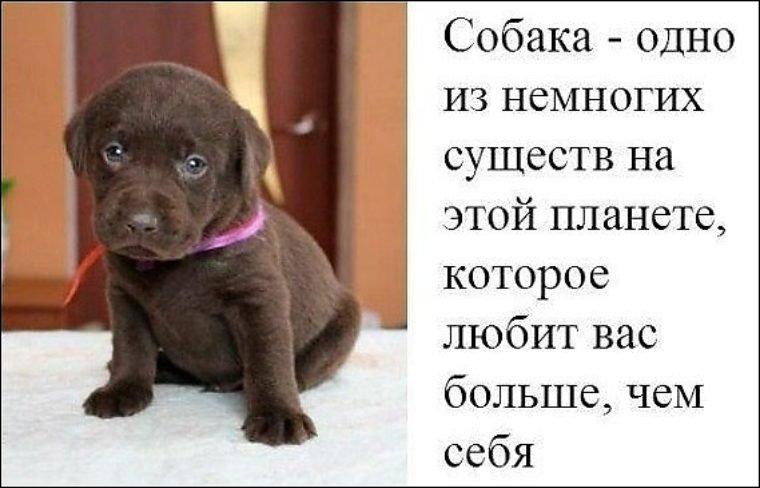 Картинки, собака друг человека с надписью на картинке