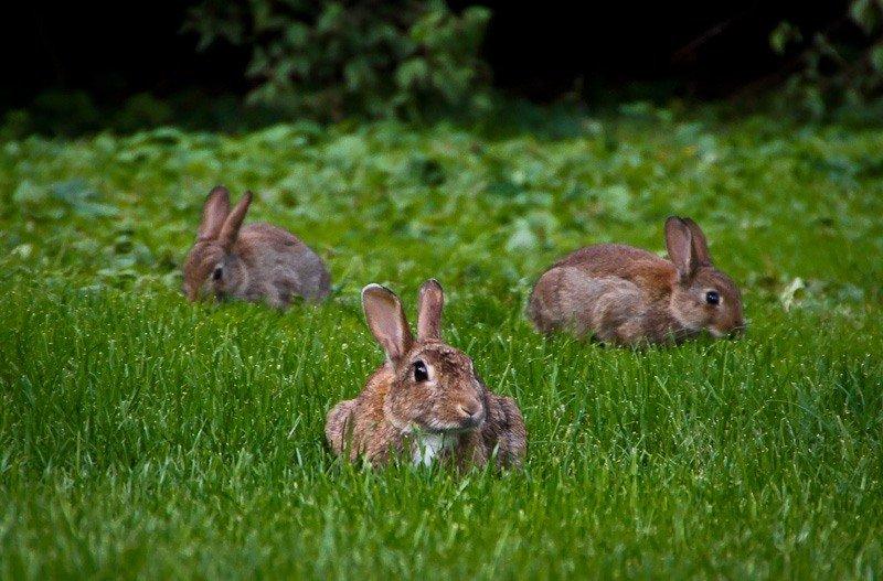 гостеприимно картинка заяц на полянке февраля