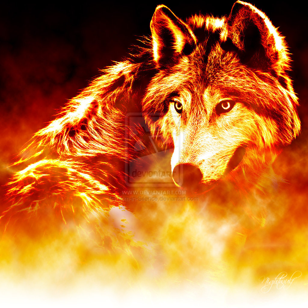 Related Pictures Wolf Wallpaper Fire Ice Wolf Pack 17804187 14971