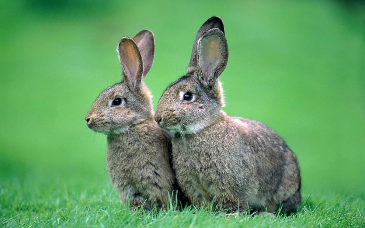 Картинки зайчатами, картинки надписями