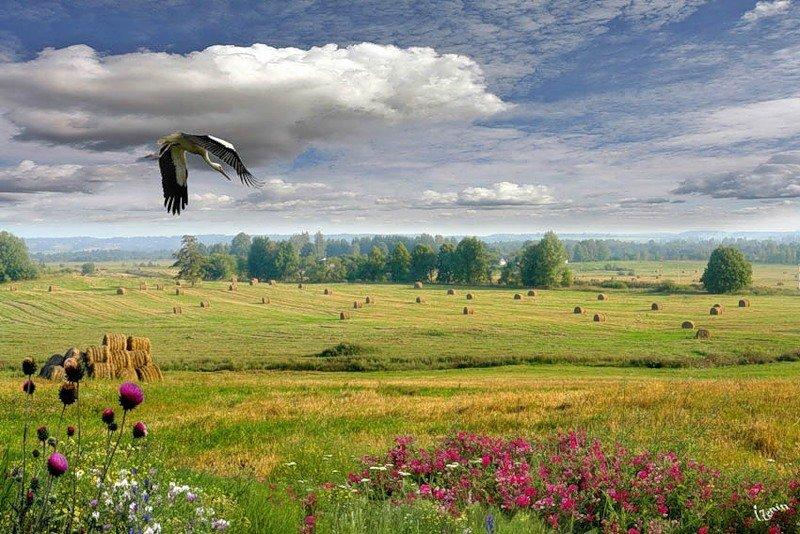 Картинки родной край беларусь