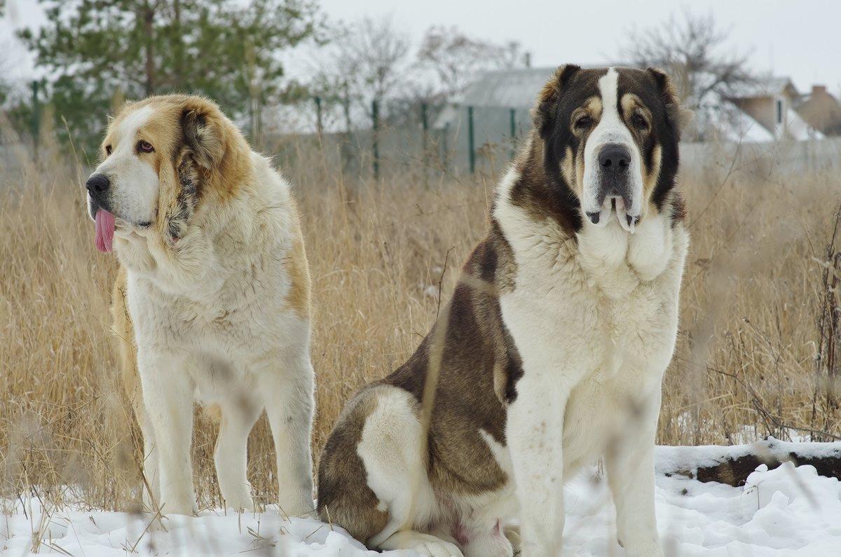 Мимимишные фото собак аренду