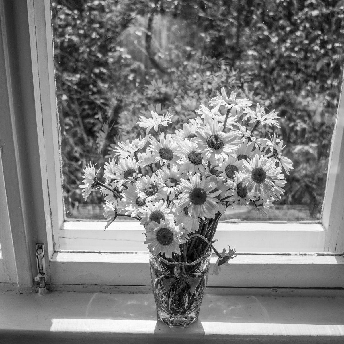 Цветы москве, подарить цветы с окнах