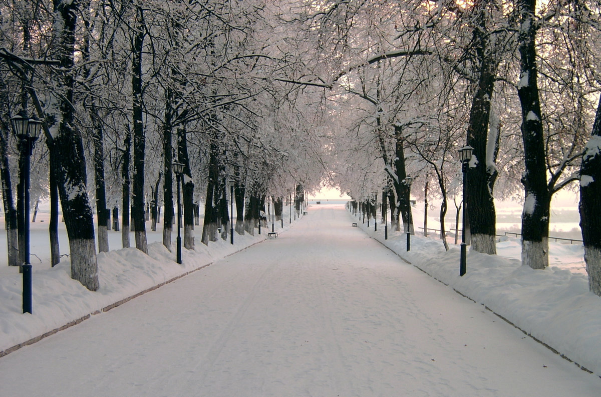 мясо шампур картинки зимний парк елки стиле ретро