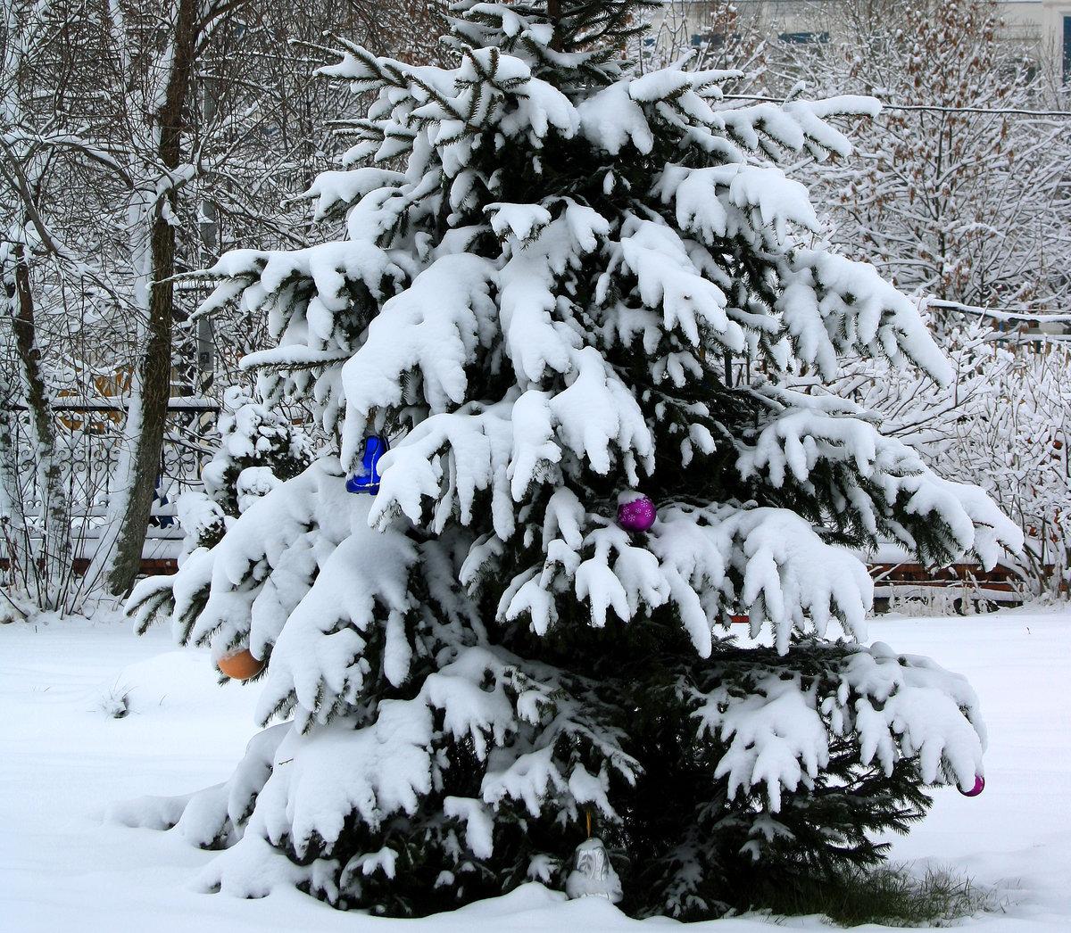 картинки елочек зимой рэя