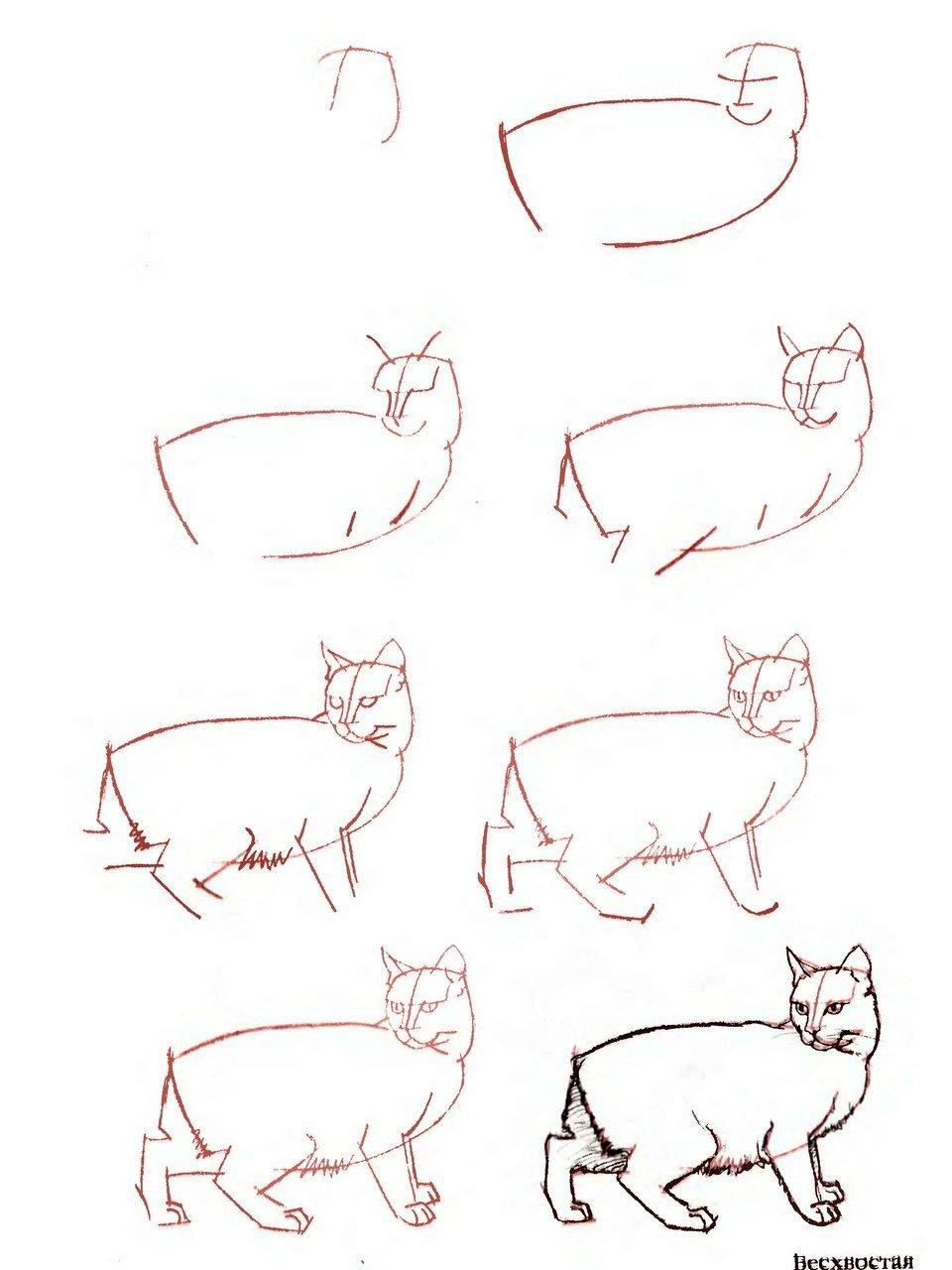 правило, коты картинки поэтапно для гулять улочками, любоваться