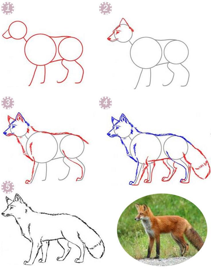 Лисицы являются частью семейства псовых, а это значит, что они связаны с волками, шакалами, и собаками.