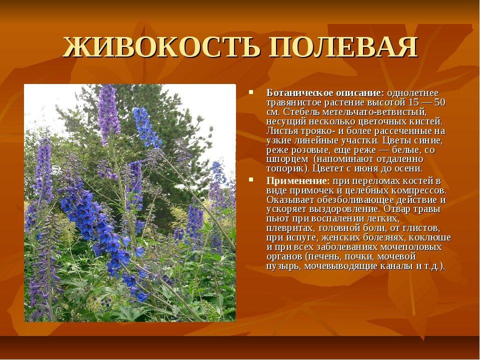 целебные травы россии и их свойства всём