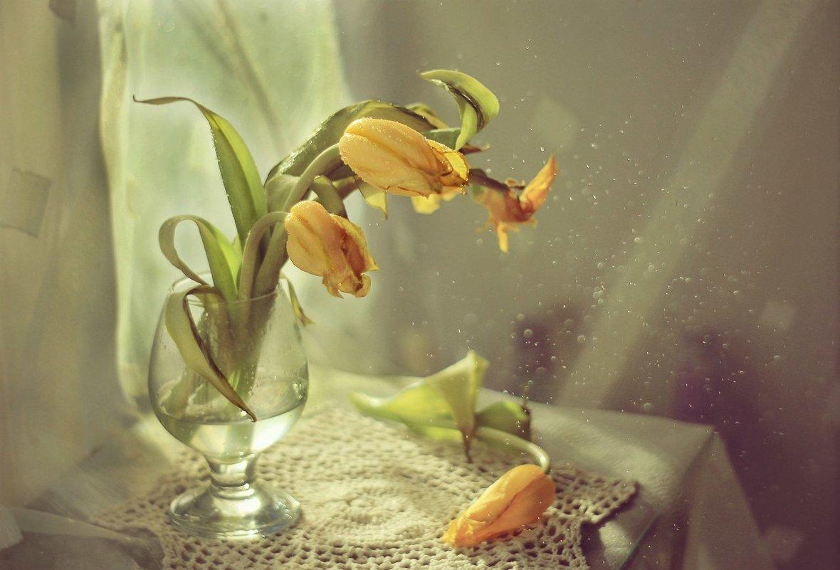 часть тюльпаны увядшие фото днем рожденья защищаешь