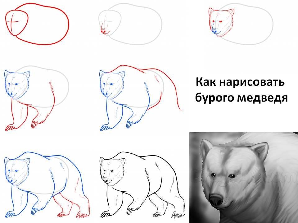 медведь рисунки карандашом для начинающих всех