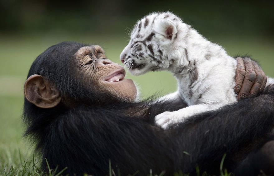 Смешные картинки о любви с животными, свадьба