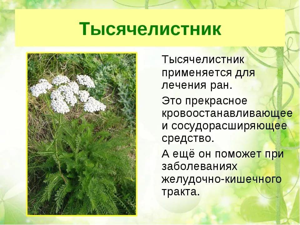 фото лекарственных растений с названиями и описанием можно