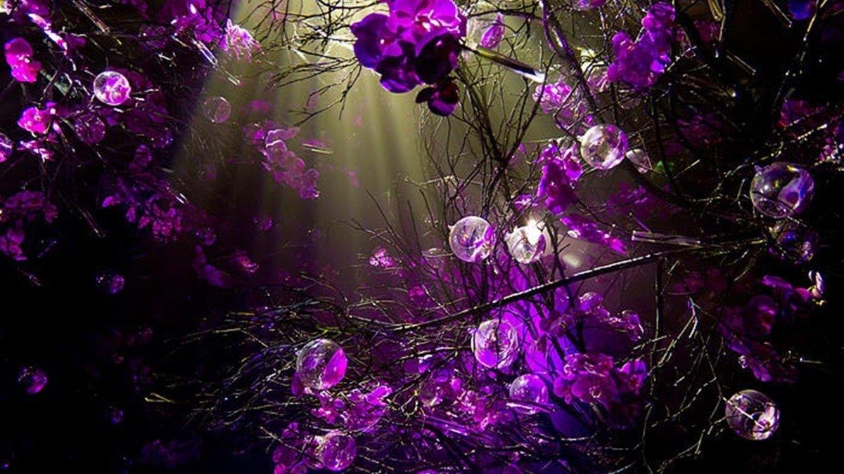Фиолетовые картинки красивые