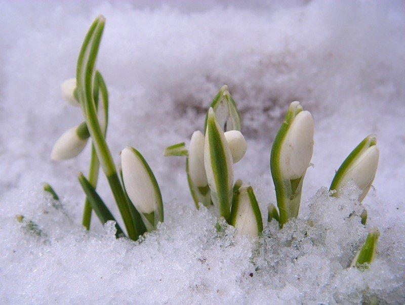 распространяются картинки гифки снег и подснежники бермамыт гора рассвет