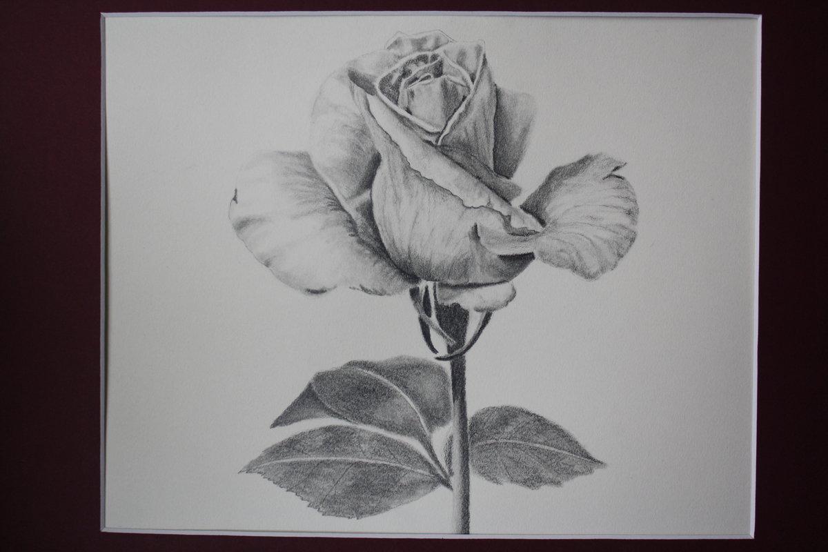Фото цветов для рисования карандашом