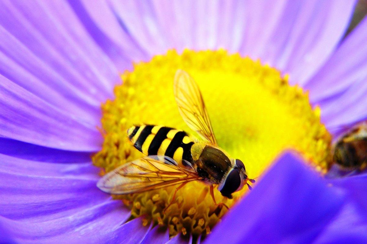можно картинки пчела на цветочке ишо