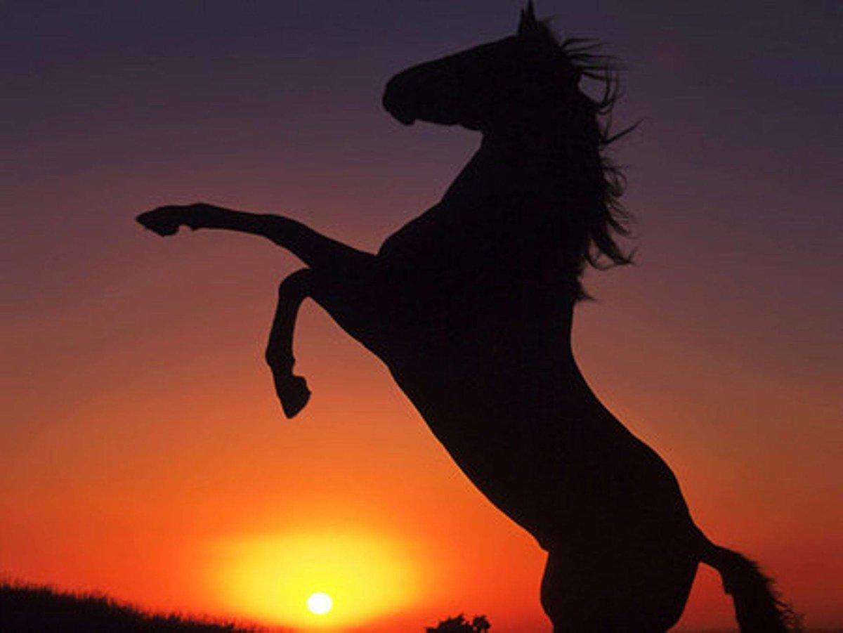 картинки конь танцует город