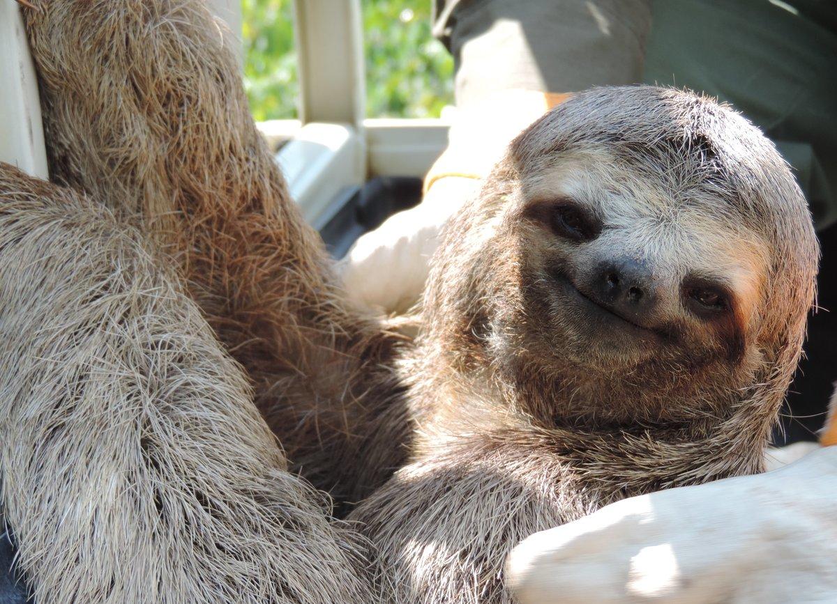 Картинка ленивец смешная, днем для женщин
