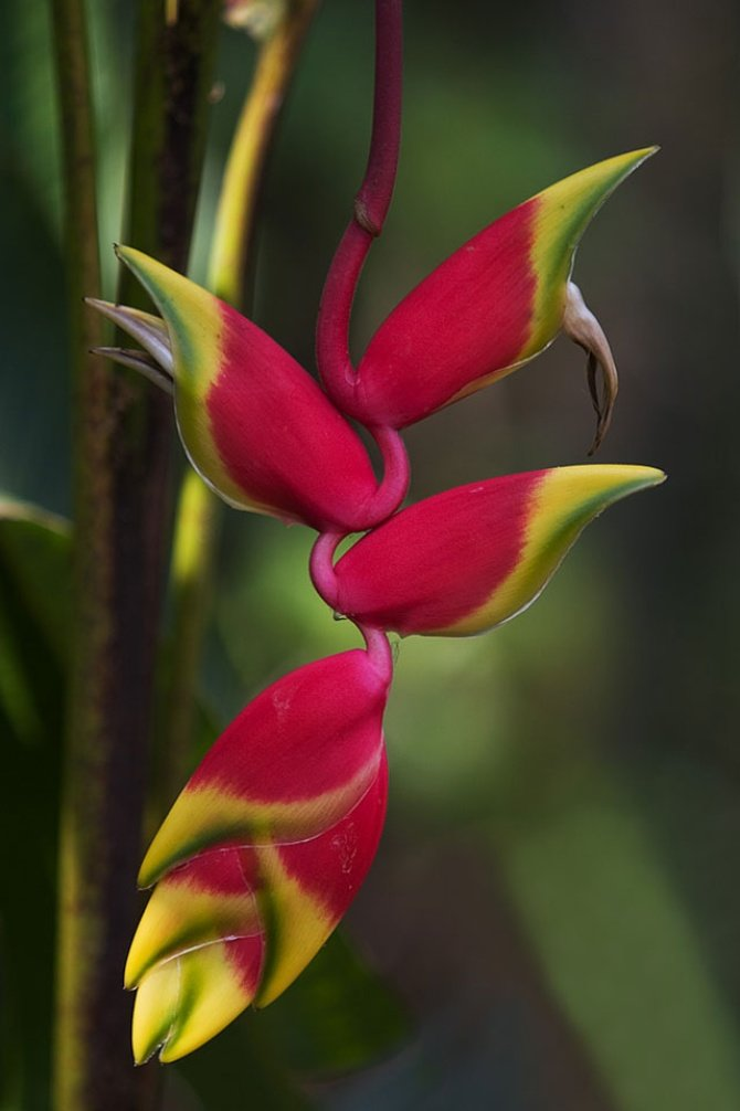 Необыкновенные цветы картинки