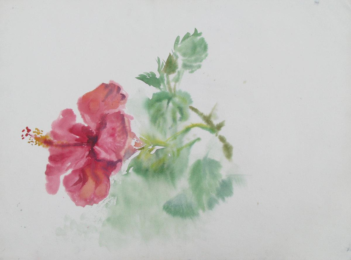 Щукин хвост цветок фото огурцов парижский