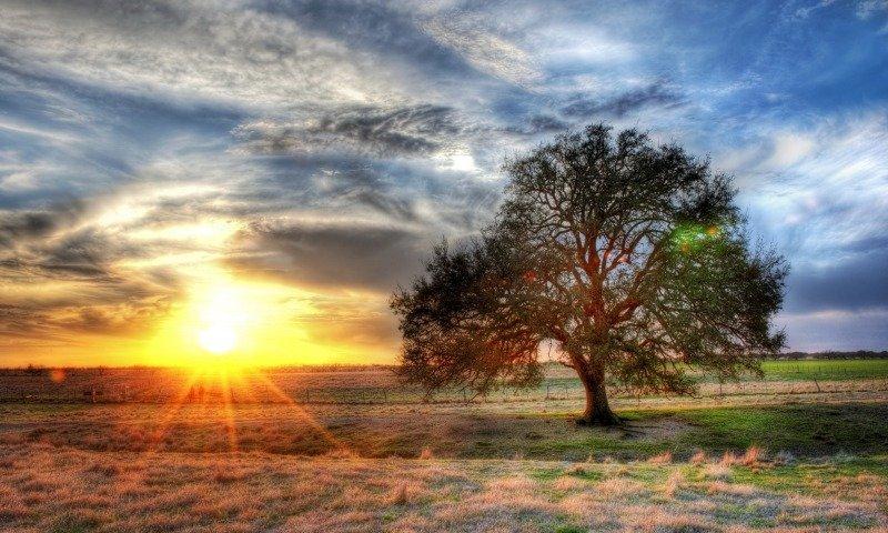 Одинокое дерево на рассвете