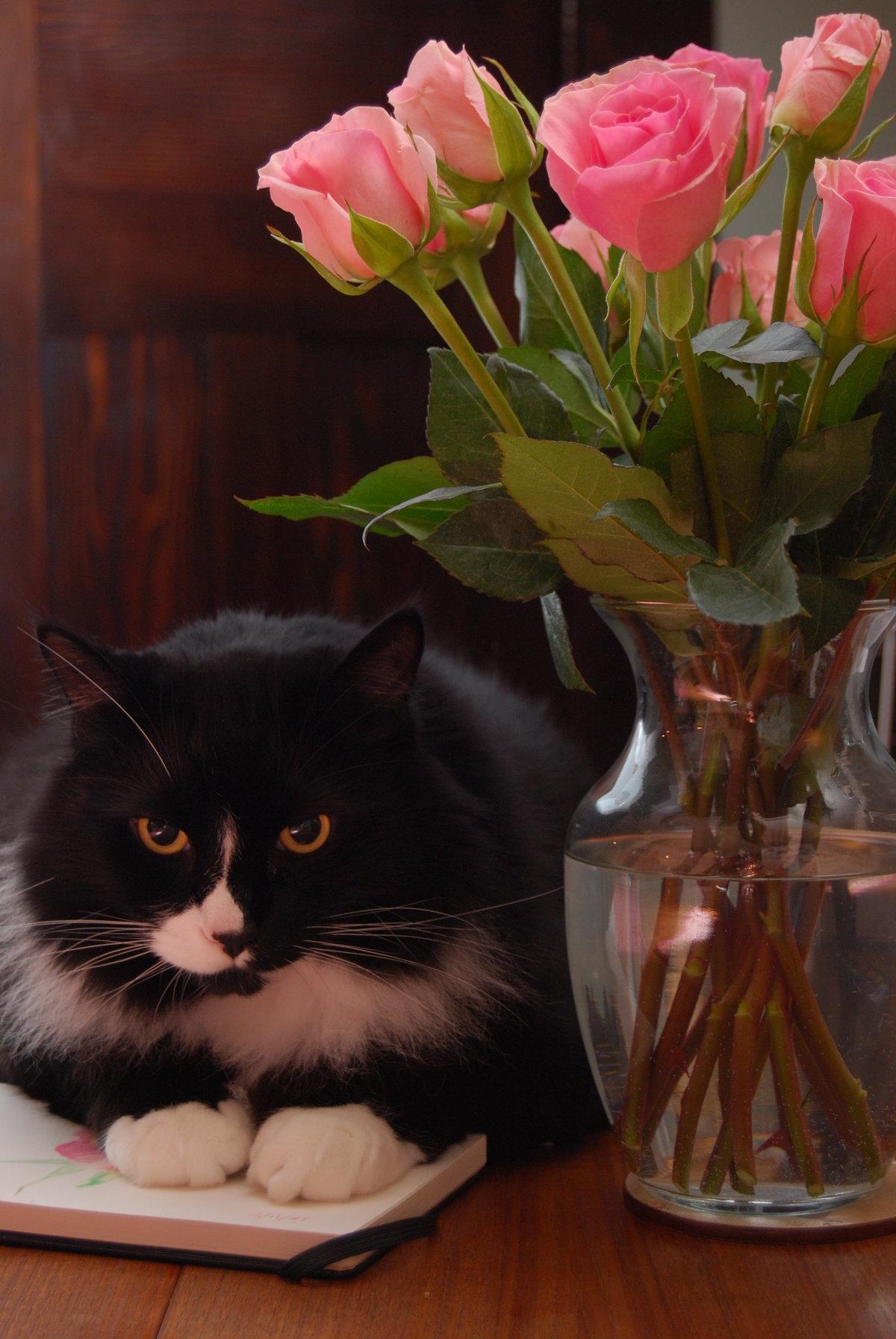 Картинки котята с цветами роз изделия