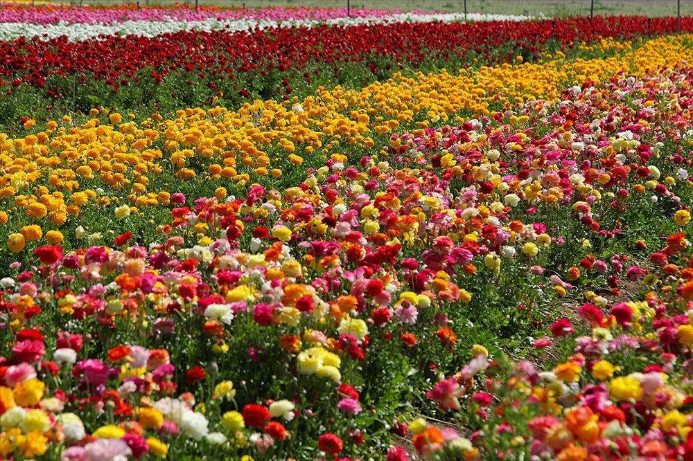Ранние весенние садовые цветы фото другие дни
