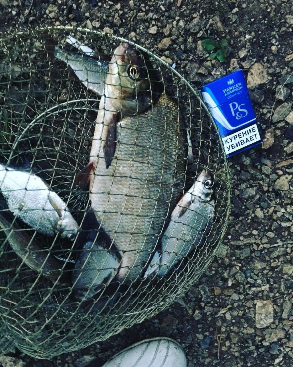 активатор клева fishhungry купить в киеве
