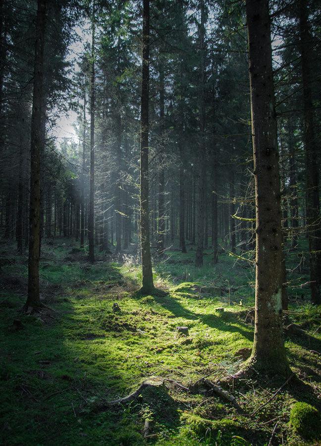 письменности лучшие фотографии леса годами спорят пытаются