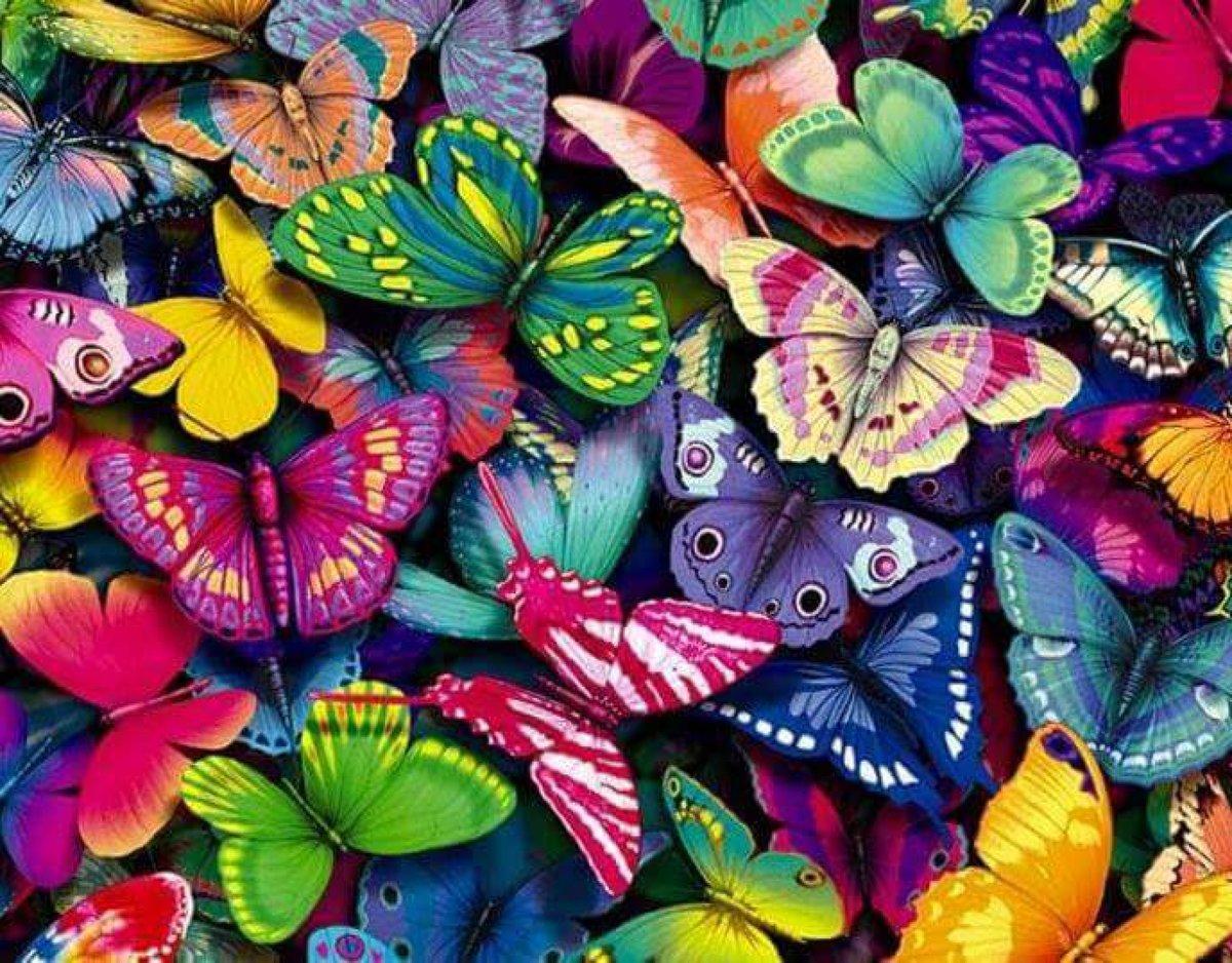Открытка много бабочек