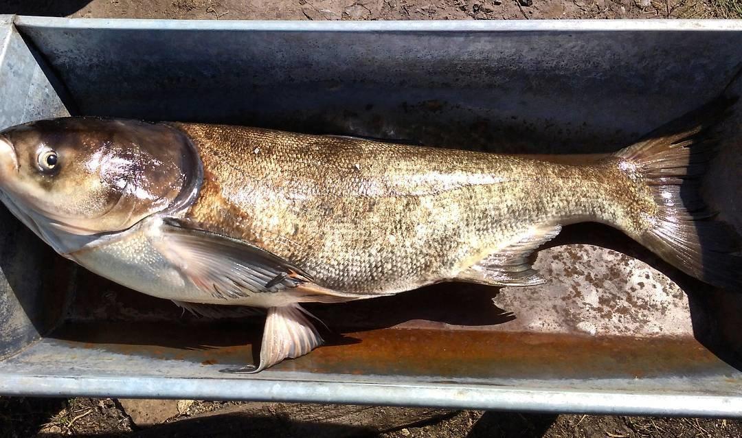 fishhungry купить в краснодаре