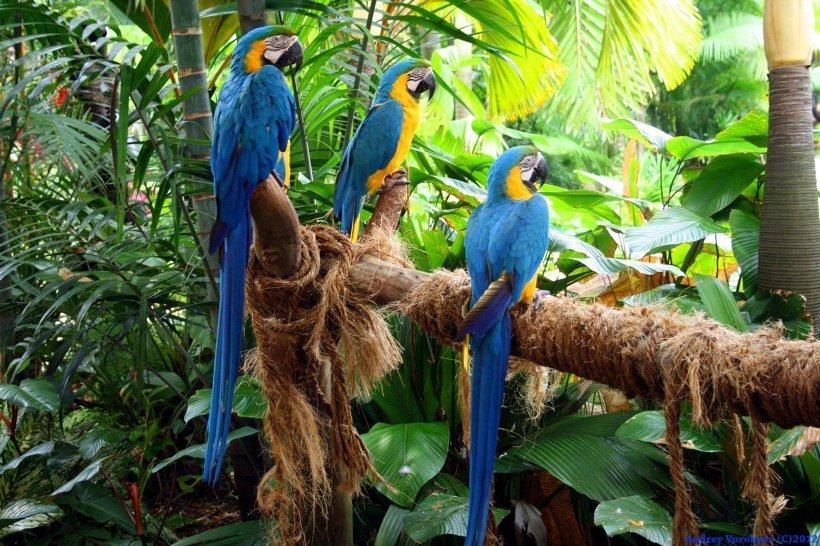 картинки с тропическими птицами