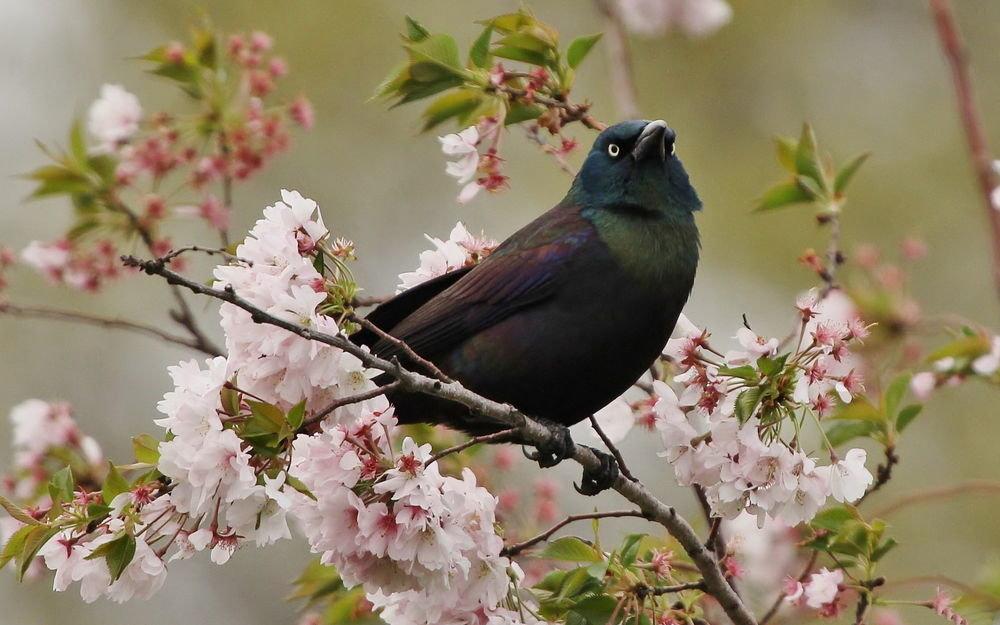 Весна птицы картинки