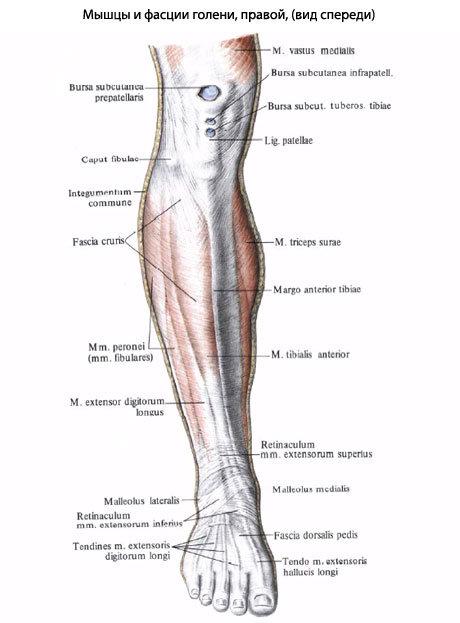 Почему болят кости голени ног