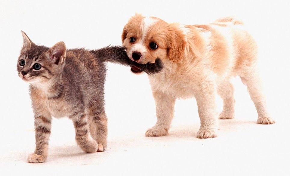 Картинки смешных котят и щенят