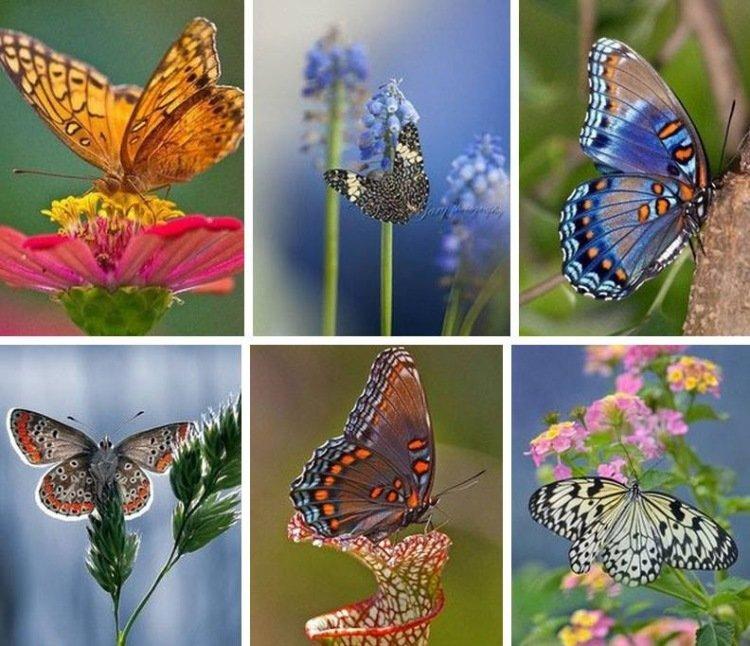 Картинки для коллажа бабочки