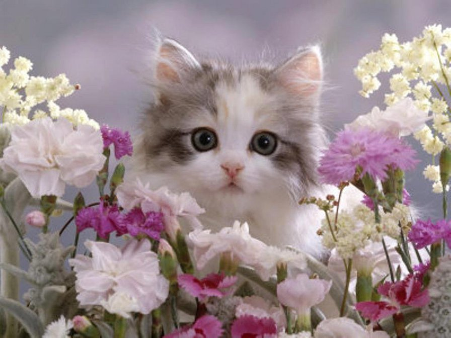 Открытка кошечка с цветами