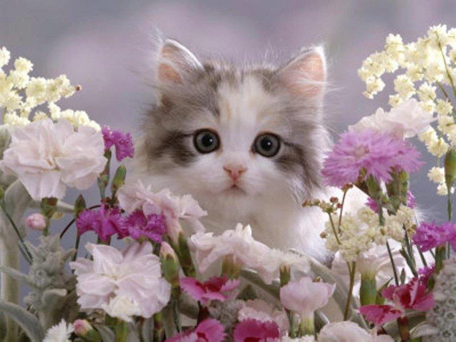 Фото кошек открытки