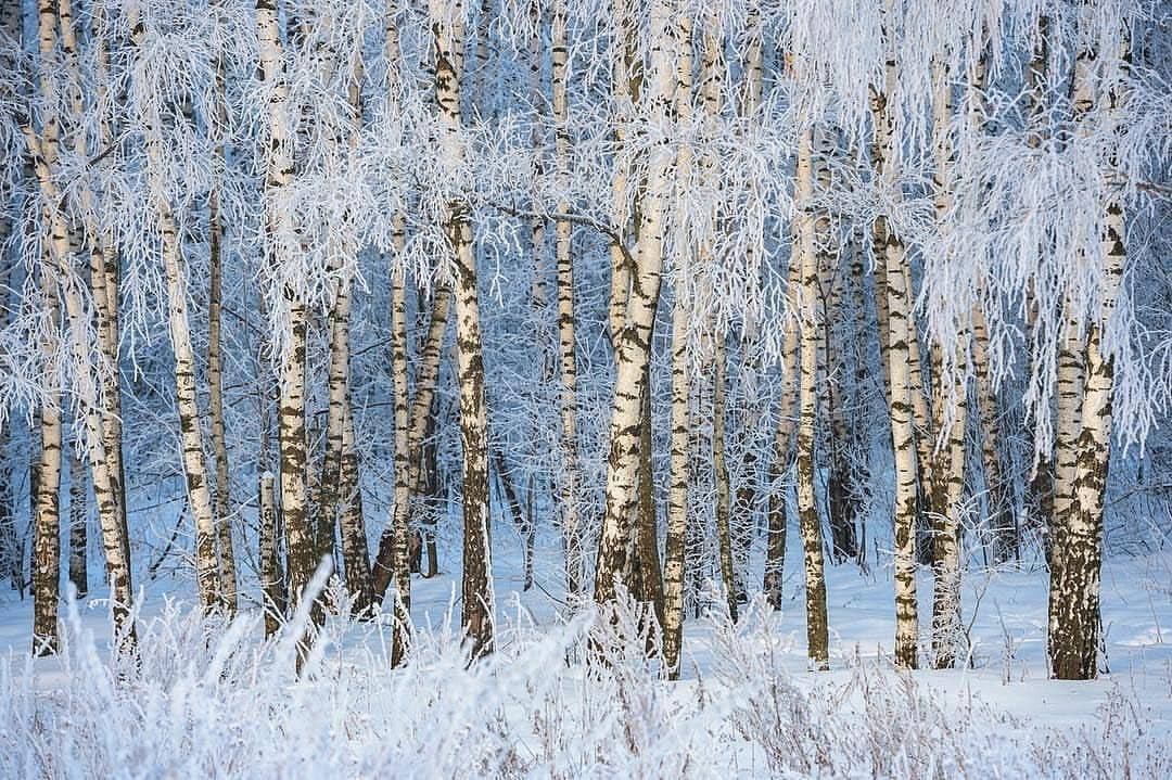 самое зима картинки березы дагестана