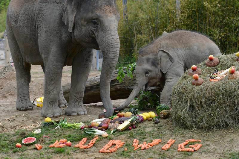 Приколы картинки слона