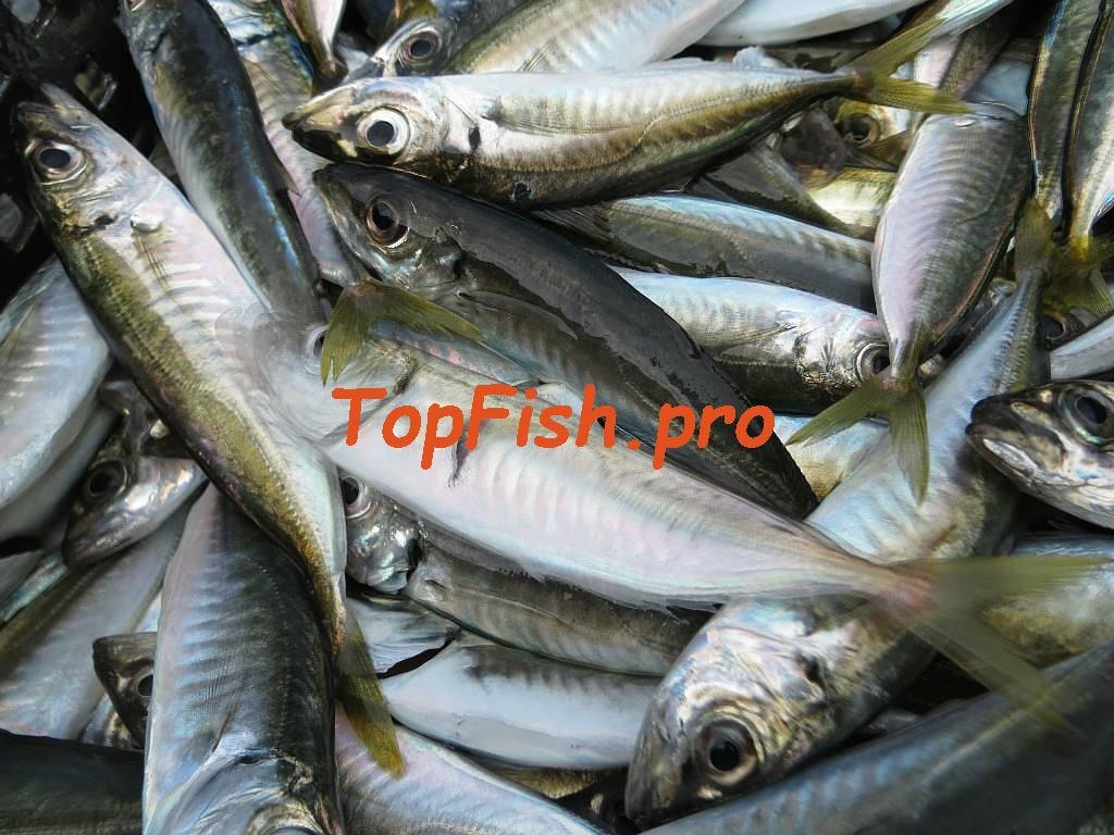 активатор клёва fishhungry купить в кирове