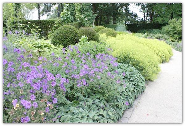 Герань садовая в ландшафтном дизайне