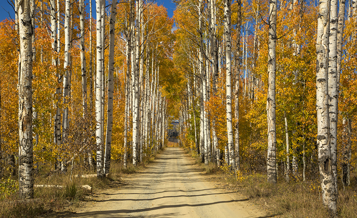 Фотообои золото лесов