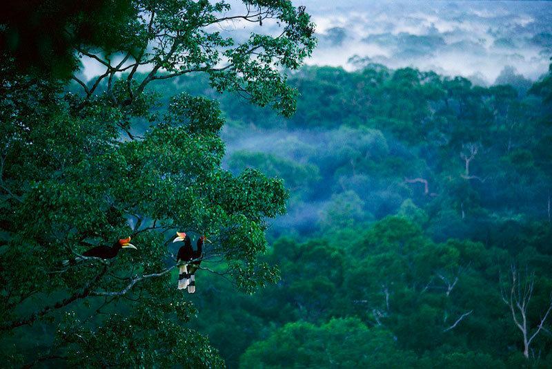 Картинки по запросу леса борнео
