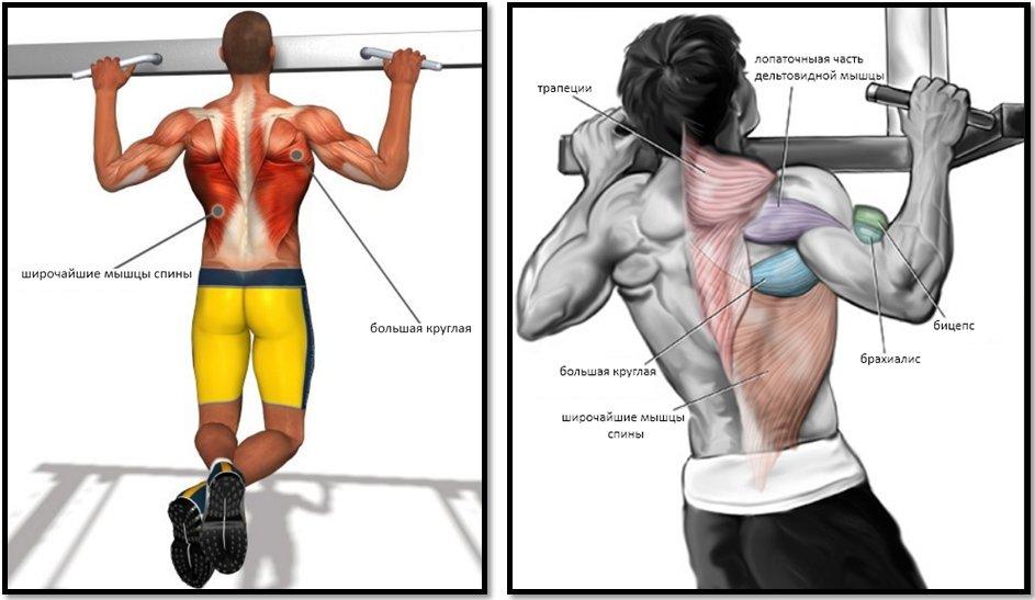 Картинки на какие мышцы влияет брусья