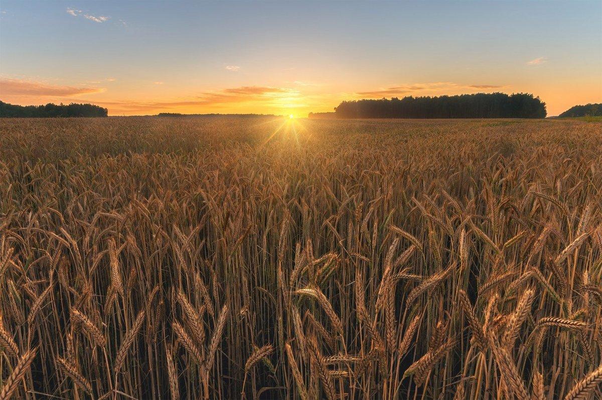 большой дом пшеница красивые фотографии часто такие