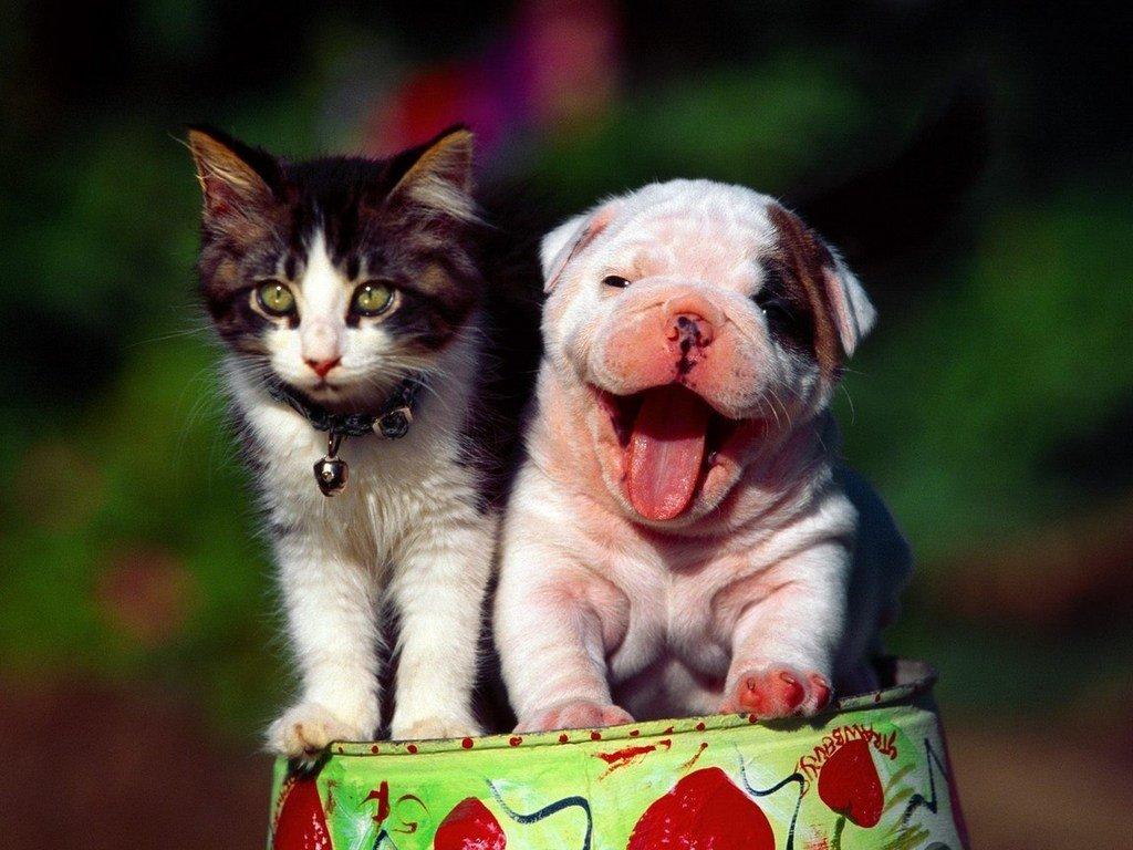Картинки красивых котиков и собачек, днем