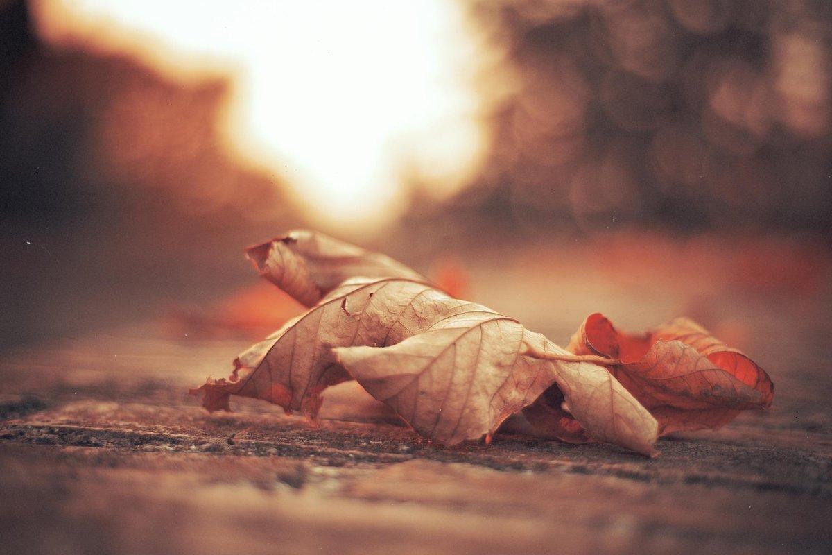 Картинки осень грусть одиночество